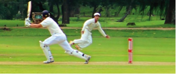 Cricket image